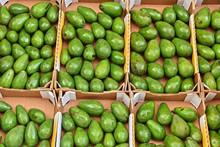 Avocados On Street Market Stall