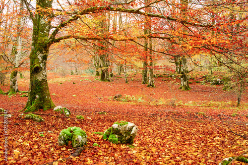 Poster Oranje eclat colorful autumn landscape at natural park