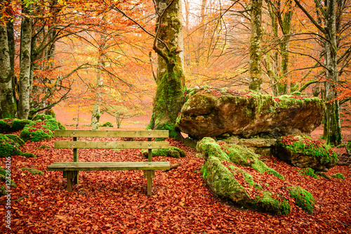 In de dag Oranje eclat lonely bench at colorful autumn landscape
