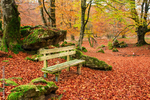 Poster Oranje eclat lonely bench at autumn landscape