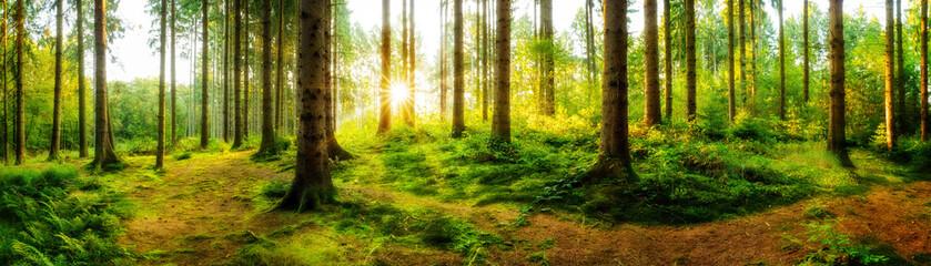 Panel Szklany PodświetlaneIdyllischer Sonnenaufgang im herbstlichen Wald