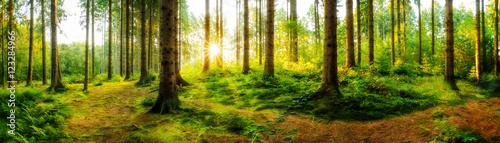 Fototapeten Wald Idyllischer Sonnenaufgang im herbstlichen Wald