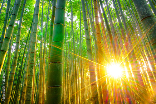 Tuinposter Bamboe Bamboo forest with sunny in morning