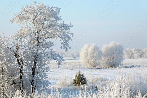 Fotobehang Lichtblauw winter Forest