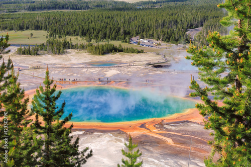 Fotobehang Natuur Park Pine trees at Grand Prismatic Springs in Yellowstone National Park