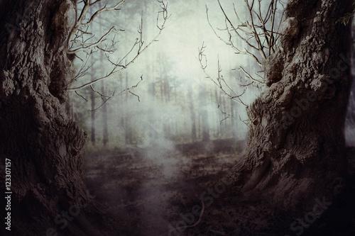 Photo  Spooky Tree in Night Mist