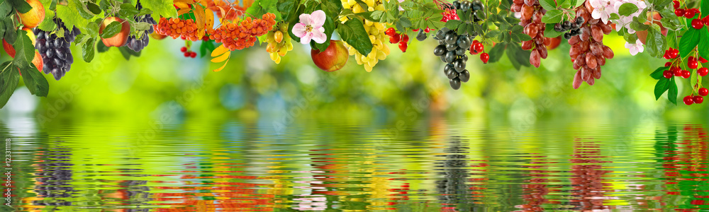 image of different fruits over the water closeup