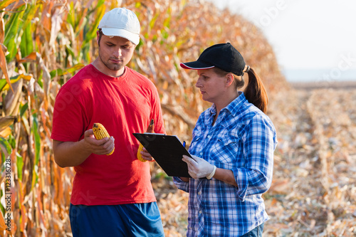 Agricultural expert inspecting quality of corn Canvas Print