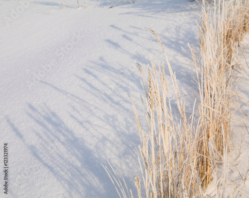 dry grass in the frost