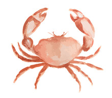 Isolated Watercolor Crab On White Background. Fresh And Tasty Gourmet Seafood For Restaurant.