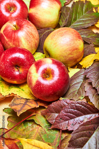 Tuinposter Bier / Cider Yellow, red and green fallen dry leaves. Small juicy red apples on the table.