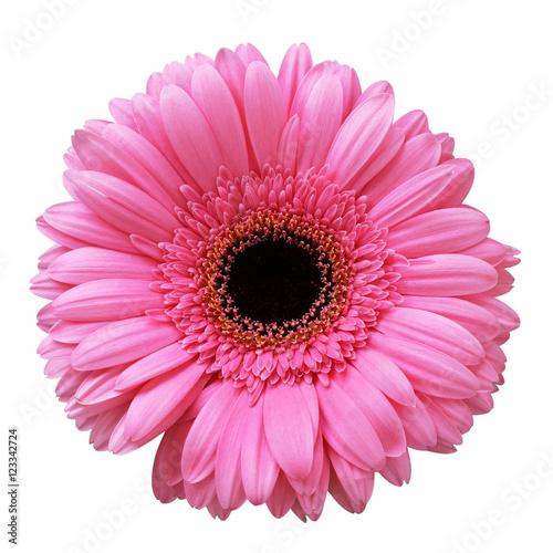 Cadres-photo bureau Gerbera Pink gerbera flower