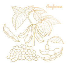 Graphic Soybean Collection