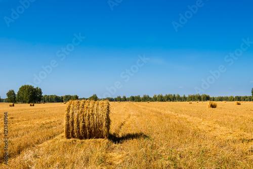 Spoed Fotobehang Weide, Moeras Large Piles of Hay Bales