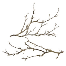 Dry Tree Branch With Lichen Is...