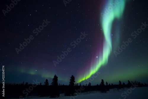 Canvas Prints Pole Nightsky lit up with aurora borealis, northern lights, wapusk national park, Manitoba, Canada.