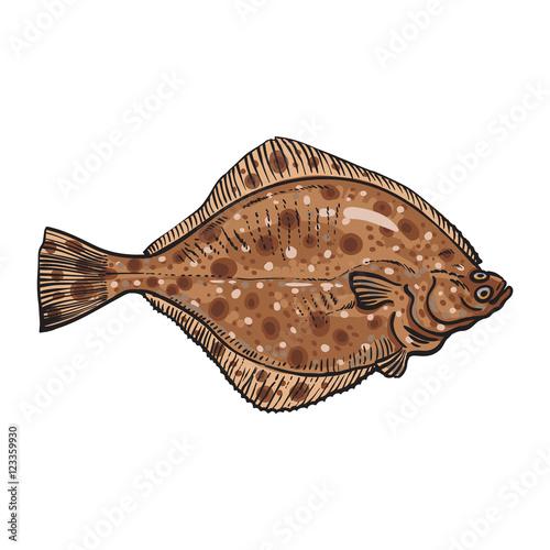 Fotografia, Obraz Hand drawn flounder, sketch style vector illustration isolated on white background