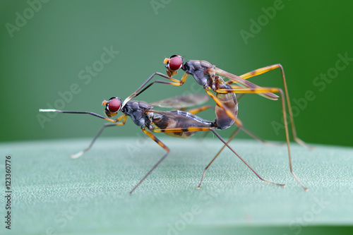 Close-up of two insects, Indonesia