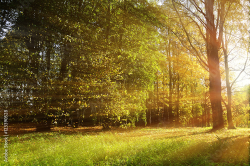Photo sur Aluminium Pistache Autumn forest sunny landscape - forest autumn trees and sunbeams shining through the trees