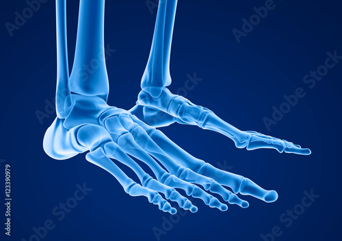 Photo Human skeleton: skeletal foot. Medically accurate 3D illustration