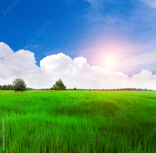 Foto op Plexiglas Groene beautiful green field