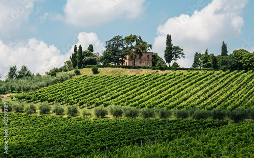 Wall Murals Pistachio Italian landscape in Tuscany