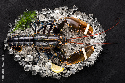 Fotografia Raw lobster on ice on a black stone table top view