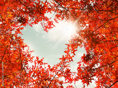 Garden Poster Red Heart shaped autumn foliage on sky background. Love nature concept.