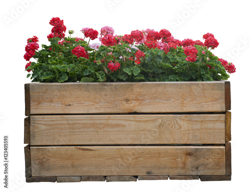 Large wooden pot with Red geranium flower, isolated on white Wallpaper Mural
