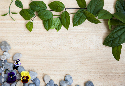 Fototapety, obrazy: Background green leaves on wood. frame