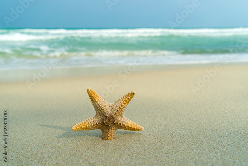 Fototapety, obrazy: Starfish on perfect beach