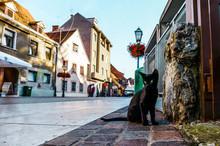クロアチアのザグレブの黒猫