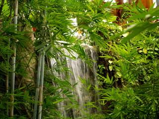 Fototapeta Bambus Wasserfall