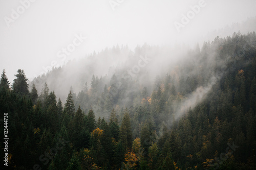 Photo sur Toile Foret Forest with fog over the mountains