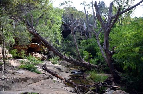 Fotografie, Obraz  Bushwalking in Lane Cove National Park. Sydney, NSW, Australia