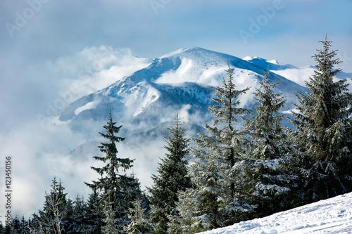 Nice winter landscape - 123450156