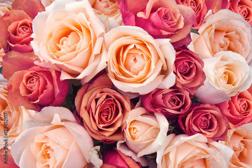 Foto op Aluminium Roses Roses as a background