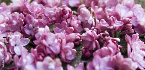 Foto op Plexiglas Dahlia lilac flowers on a table