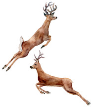Watercolor Running Deers Set Isolated On White Background. Chris