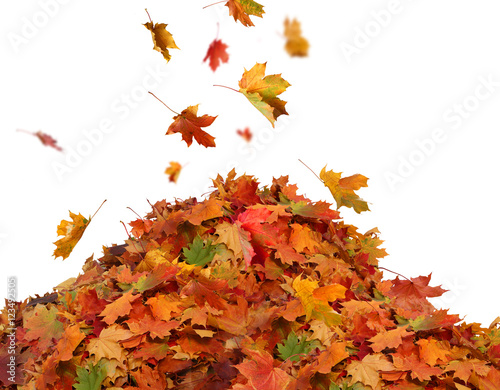 Pile of autumn colored leaves isolated on white background. Wall mural