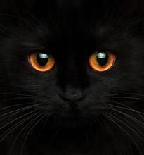 Close Up Of Black Cat With Orange Eyes