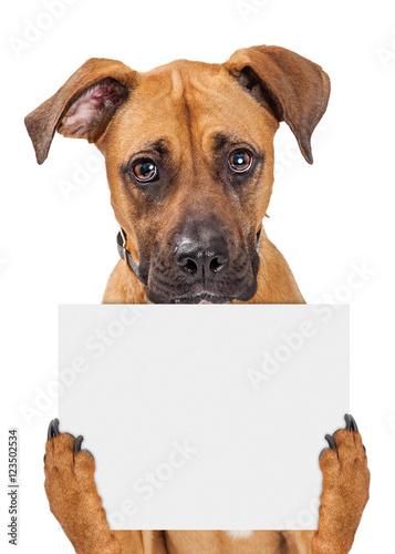 Smutny pies trzyma pusty znak