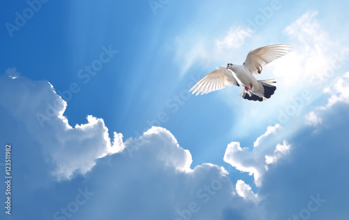 Dove in the air symbol of faith over shiny background Canvas-taulu