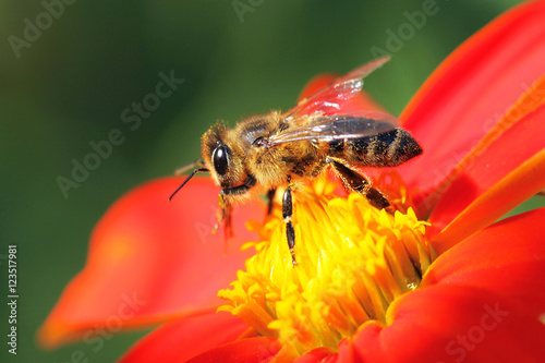 Foto op Canvas Bee bee