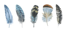 Watercolor Bird Feather From W...