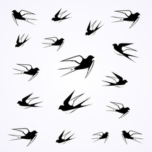 Swallows Fly In The Sky