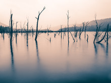 Lake Rowallan