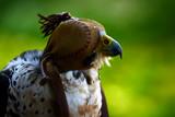 Fototapeta Zwierzęta - Ptaki