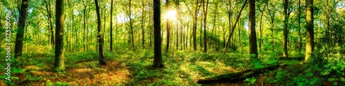 Poster Forets Waldpanorama mit Sonnenstrahlen