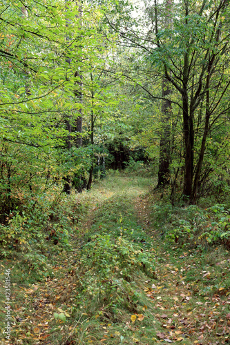 Tuinposter Weg in bos pathway wood leafage 7